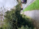 Hedges overhanging and blocking footpath